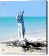 Washed Ashore Acrylic Print