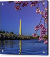Washington Reflection And Blossoms Acrylic Print