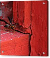 Wasp And Red Acrylic Print