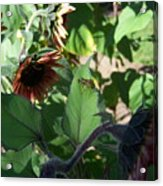 Wasp And Sunflowers Acrylic Print