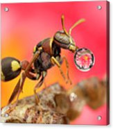 Wasp Blowig Bubble 160507e Acrylic Print