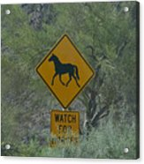 Watch For Horses Acrylic Print