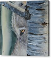 Watcher In The Wood Acrylic Print