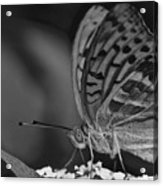 Watchful Butterfly Acrylic Print