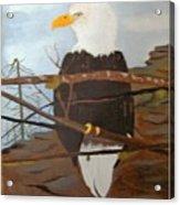 Watchful Eagle Acrylic Print