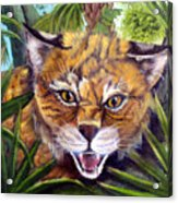 Watching  Florida Bobcat Acrylic Print