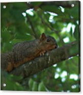 Watching From Above Acrylic Print