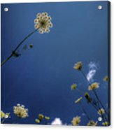 Watching The Day Float By Acrylic Print