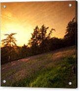 Watching The Sunset Acrylic Print