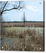 Water And Cattails Acrylic Print