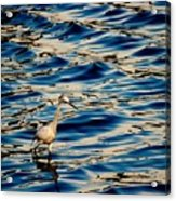 Water Bird Series 11 Acrylic Print