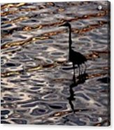 Water Bird Series 17 Acrylic Print