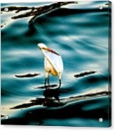 Water Bird Series 33 Acrylic Print
