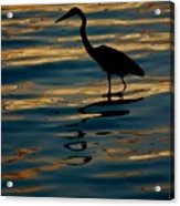 Water Bird Series 7 Acrylic Print