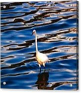 Water Bird Series 9 Acrylic Print