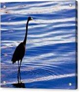 Water Bird Series Acrylic Print