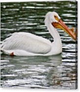 Water Bird With Notches Acrylic Print