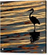 Water Birds Series 3 Acrylic Print