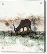 water buck in Addo Park S.A. Acrylic Print