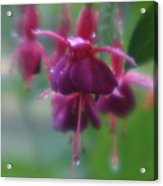 Water Drop Monets Garden Acrylic Print
