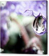 Water Drop On Purple Flower Acrylic Print
