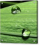 Water Droplet On A Leaf Acrylic Print