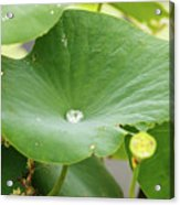 Water Droplet  Acrylic Print