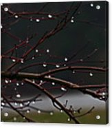 Water Droplets Acrylic Print