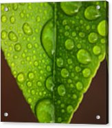 Water Droplets On Lemon Leaf Acrylic Print