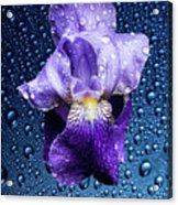 Water Drops On Purple Iris Acrylic Print
