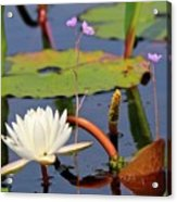 Water Flowers Acrylic Print