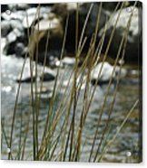 Water Flowing 1 Acrylic Print