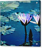 Water Glow Acrylic Print