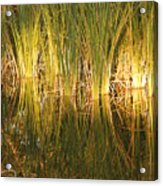 Water Grass In Sunset Acrylic Print