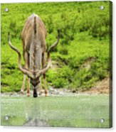 Water Hole Acrylic Print
