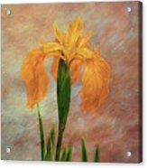 Water Iris - Textured Acrylic Print