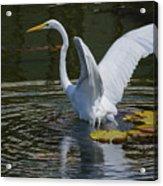 Water Landing Acrylic Print