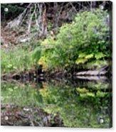 Water Like A Mirror Acrylic Print