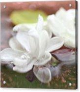 Water Lilac Acrylic Print