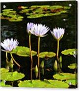 Water Lilies 1 Acrylic Print