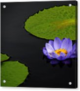 Water Lilies, Aligned  Acrylic Print