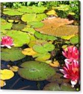 Water Lilies At San Juan Capistrano Acrylic Print