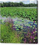 Lotus Flowers Forever Acrylic Print