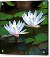 Water Lilies II Acrylic Print