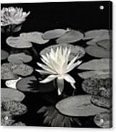 Water Lilies In Black And White Acrylic Print