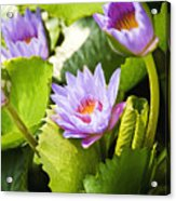 Water Lilies Acrylic Print by Ray Laskowitz - Printscapes