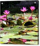 Water Lilies Tam Coc  Acrylic Print