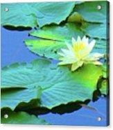 Water Lillies Acrylic Print