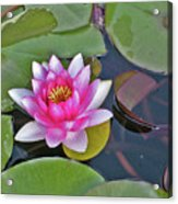 Water Lilly  And Lilly Pads Acrylic Print