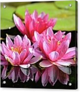 Water Lilly Triplets Acrylic Print